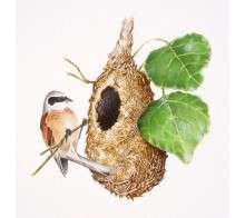 f - il nido del pendolino