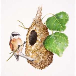 c - il nido del pendolino