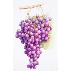b - amazing grapes
